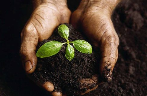 INSPIRATIONAL QUOTES ON PLANTING SEEDS OF CHANGE TRANSFORMATION Simple Planting Seeds Inspirational Quotes